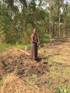 Teenage girl tilling the land in mid-day jan. sunshine in Uganda - Desperate yet remains positive
