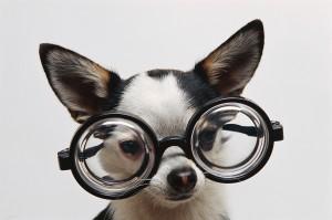 ICSO Myopia! Credit:joeysargent.com